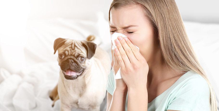 Så behandlar du pollen- och djurallergi